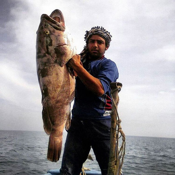Fishing up grouper fish by Iranian old style fishing net