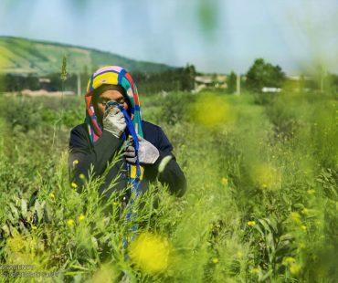 Iranian women work in green nature