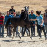 Horse beauty and riding contest was held in Sorkheh Kooh in Arak, Markazi province.