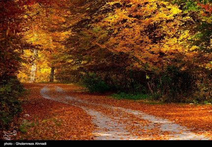 Photo: Wonderful nature fall in Mazadaran