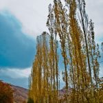 Iran autumn nature+Photo