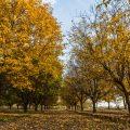 Iran autumn nature+Photo