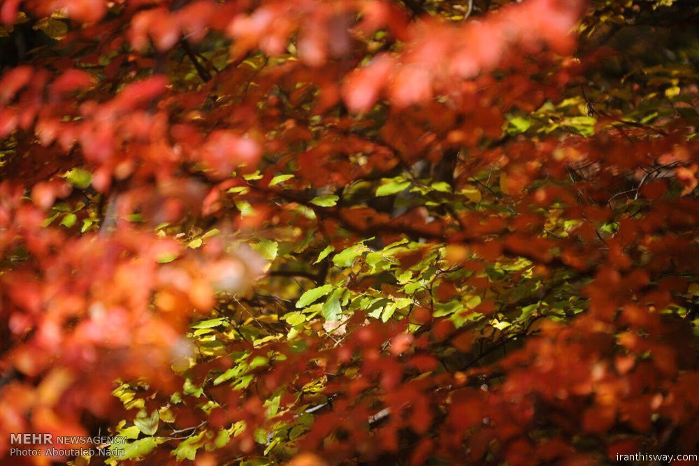 Photo: Colorful autumn of Golestan forest