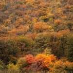 Colorful autumn of Golestan forest