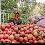 Photo: Pomegranates pick up from Hawraman villages