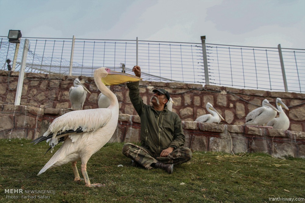 Photo: An Iranian who loves animals
